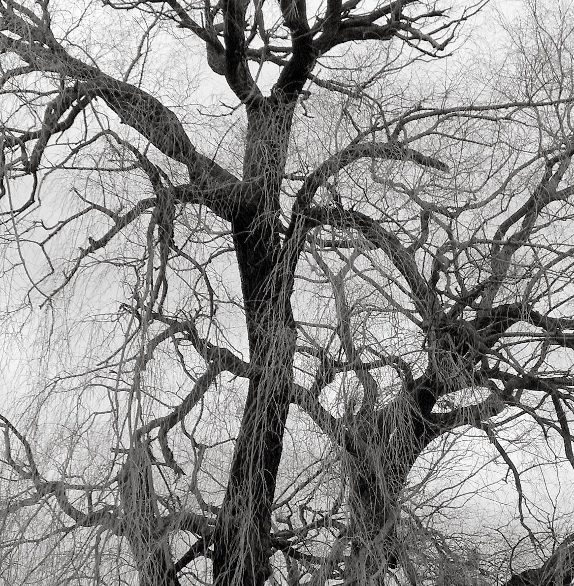bw-gp-tree
